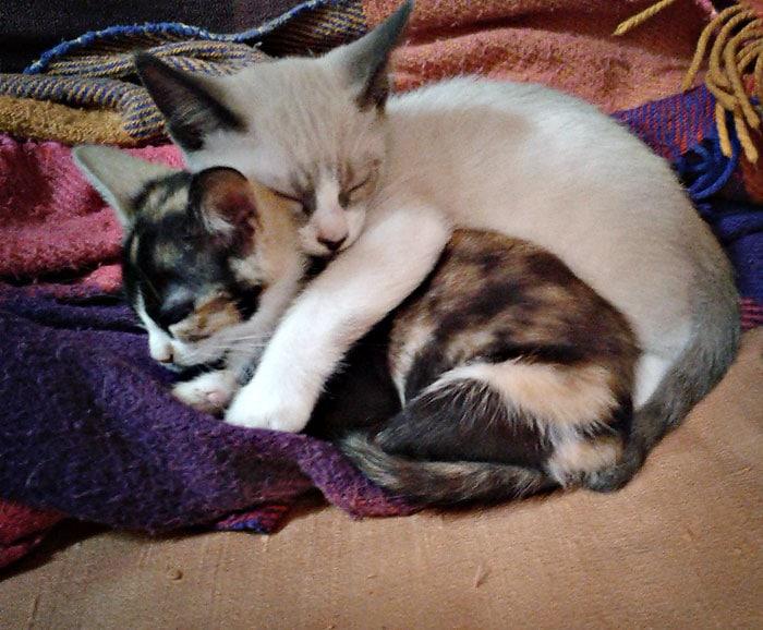 Vacanzanimaux - Garde à domicile et hébergement pour animaux